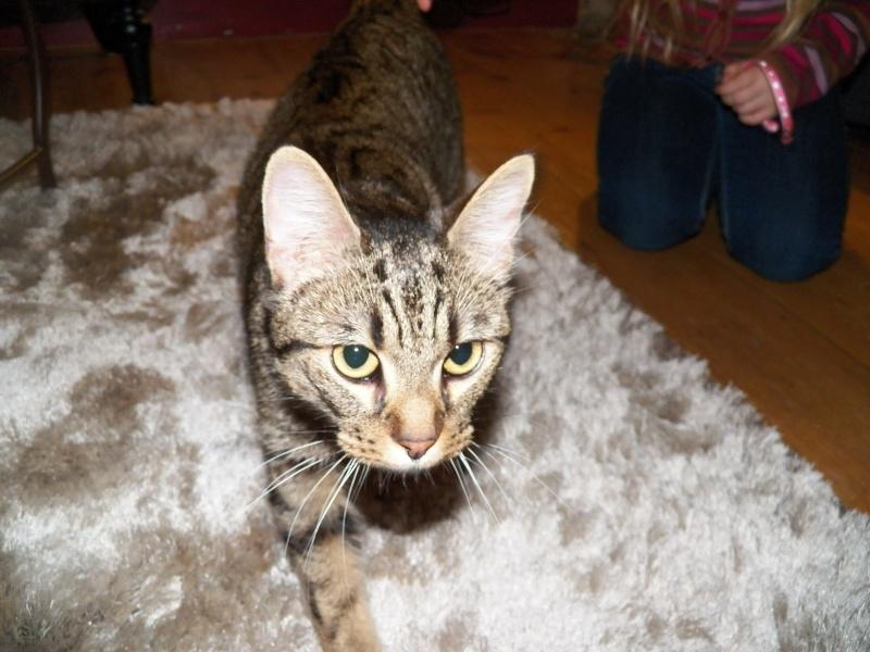 Des nouvelles d'Amy adoptée le 26 janvier 2013 103_0811
