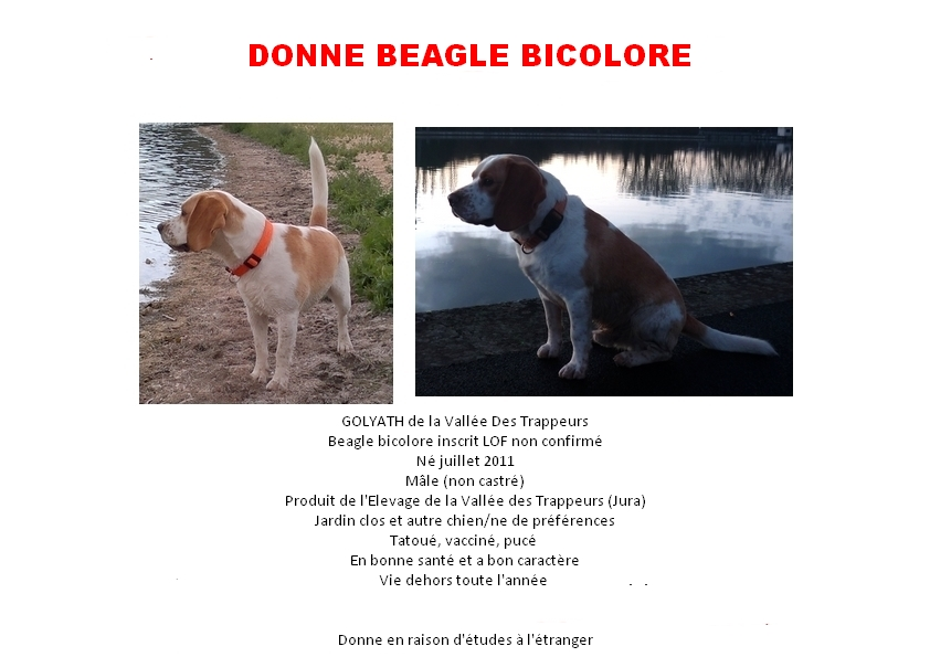 DONNE BEAGLE BICOLORE 2 ANS  Cherce11