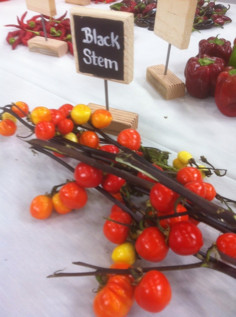 The National Heirloom Exposition - Sept in CA  Heirlo12