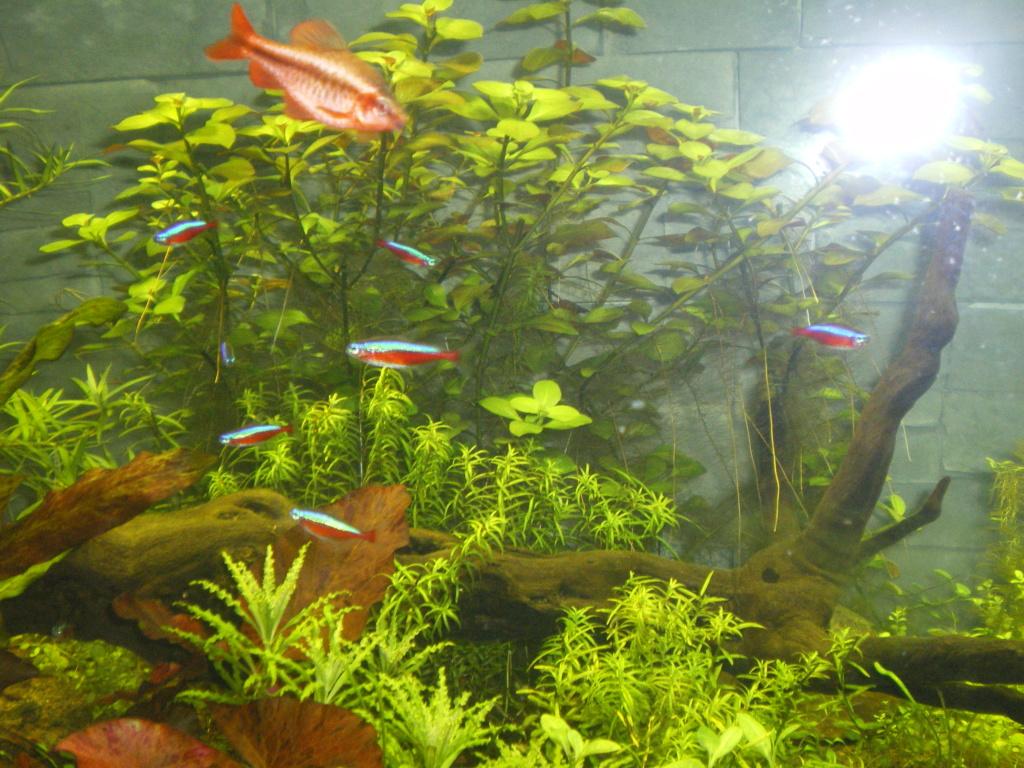 Présentation de mon aquarium - Page 4 Imgp0112
