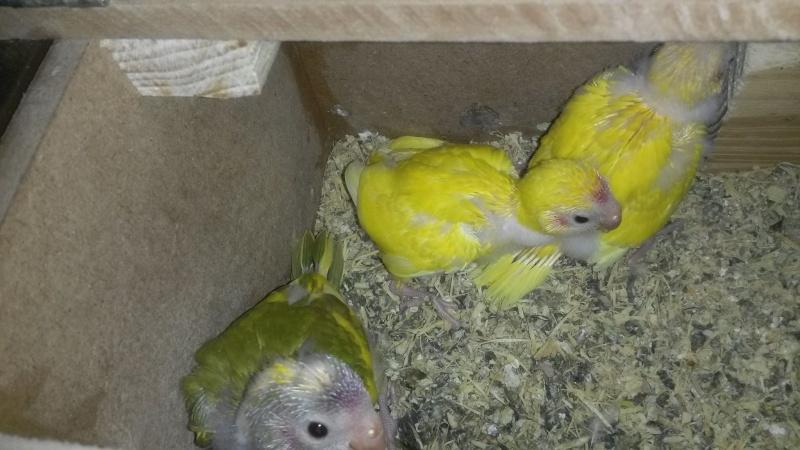 nos petits bébés 12684110