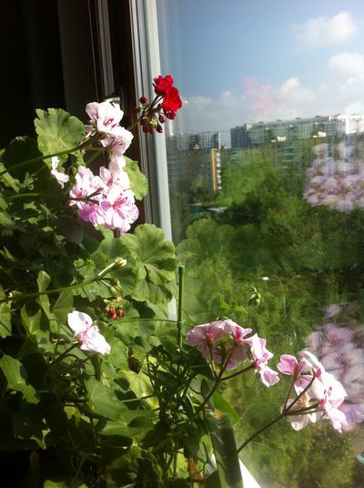 """""""Лютики-цветочки у меня в садочке..."""" Img_0311"""
