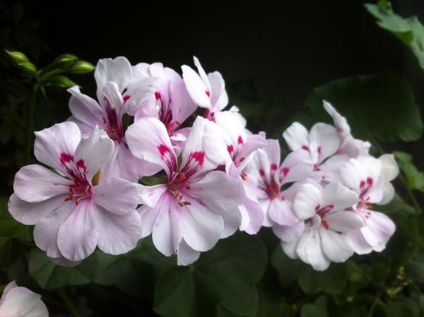 """""""Лютики-цветочки у меня в садочке..."""" Img_0313"""