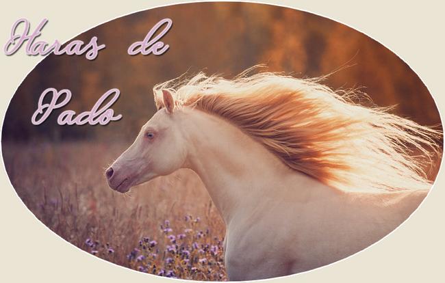 ∞ Haras de Pado.