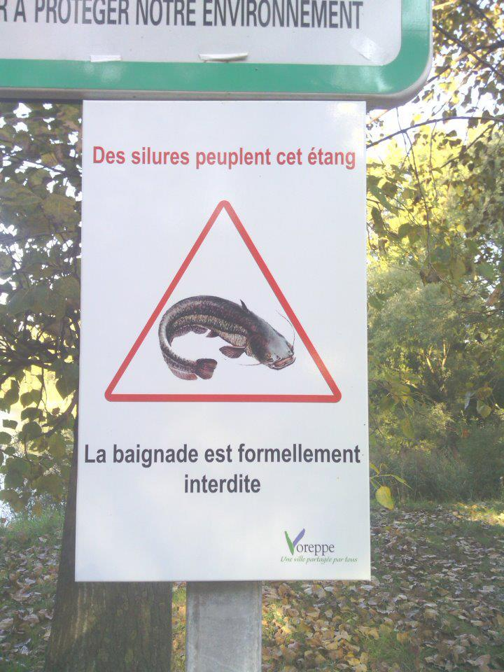 Attention aux Silures ! 11100911