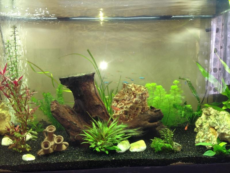mon aquarium Img_0111