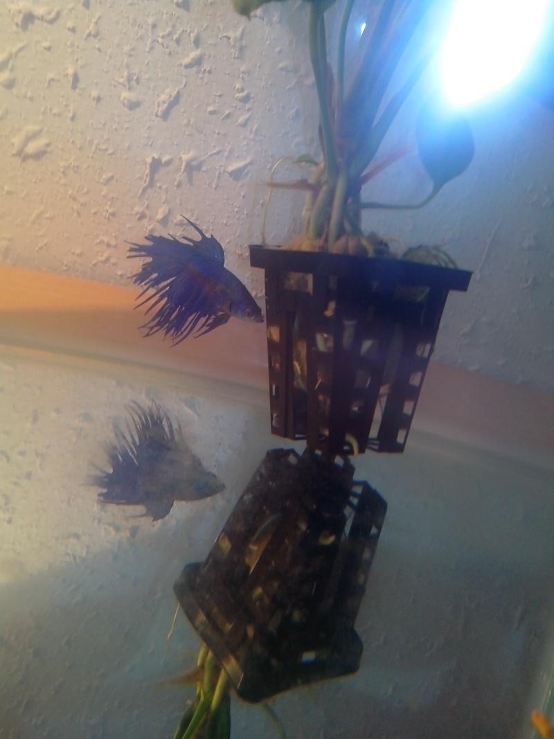 Petit trou dans sa nageoire dorsale Img_2010