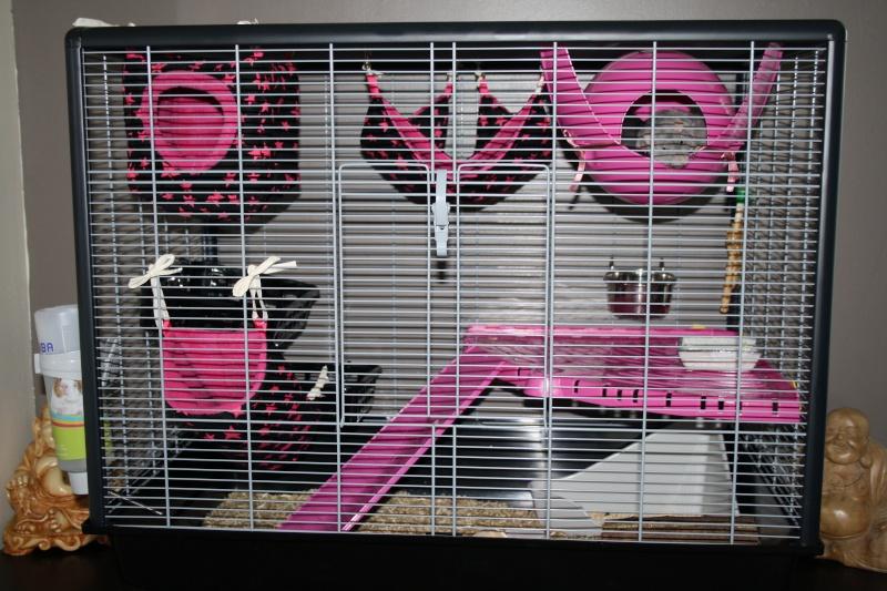 Photos de vos cages - Page 37 Img_7310