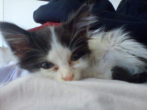 Mon petit Kiwi 13787110