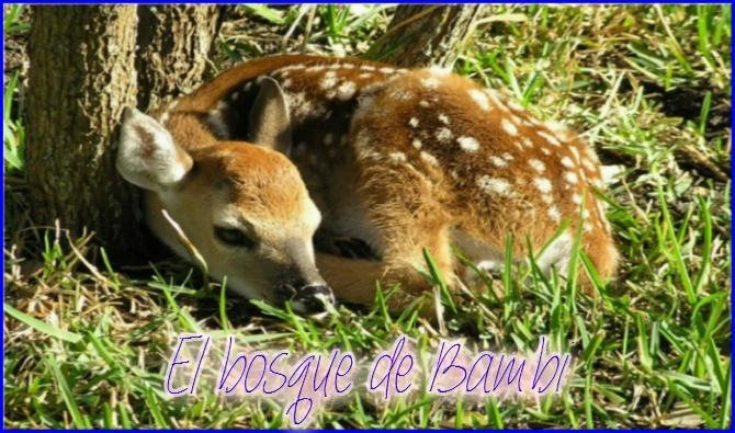 El bosque de Bambi