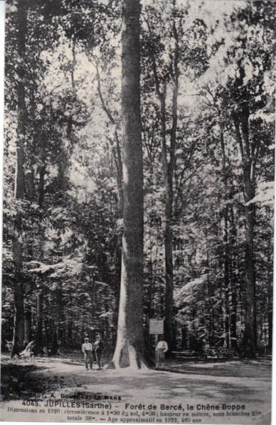 Forêt de Bercé (72) Boppe110