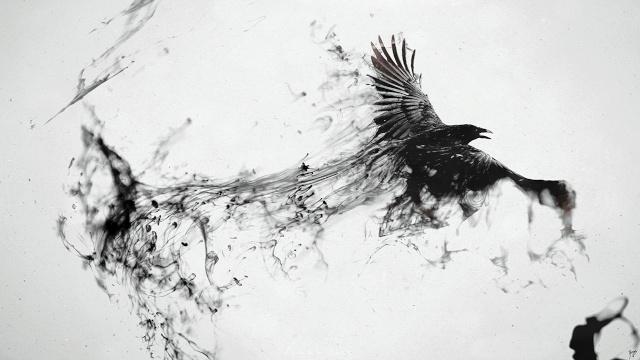Corvus trollus
