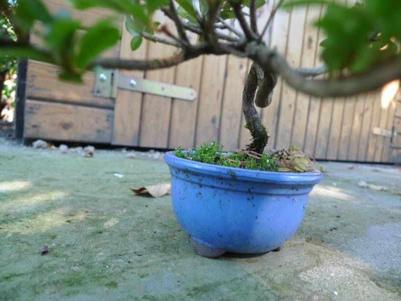 Piccola Azalea P1150213
