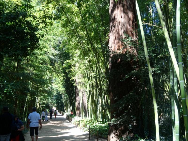 La bambouseraie à Anduze ( GARD) Dsc02041