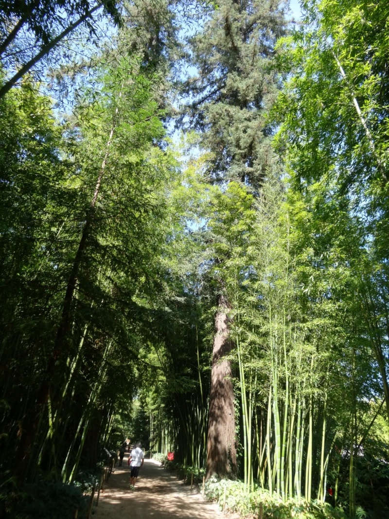 La bambouseraie à Anduze ( GARD) Dsc02042