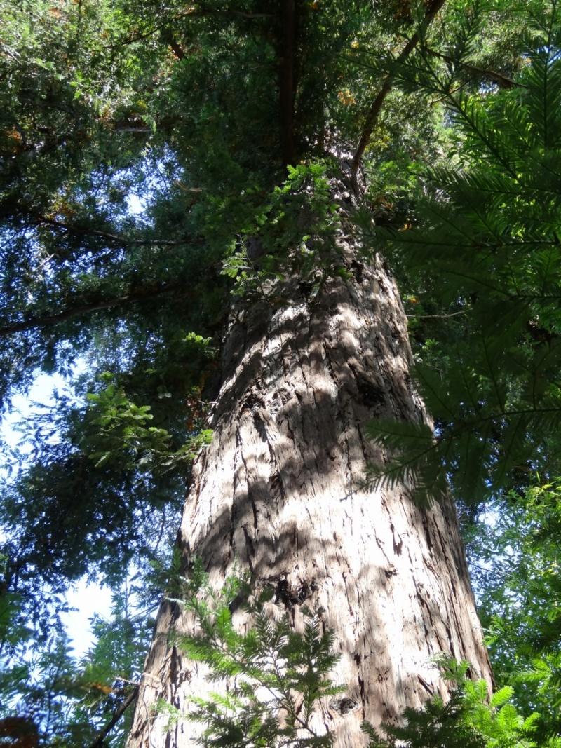La bambouseraie à Anduze ( GARD) Dsc02043