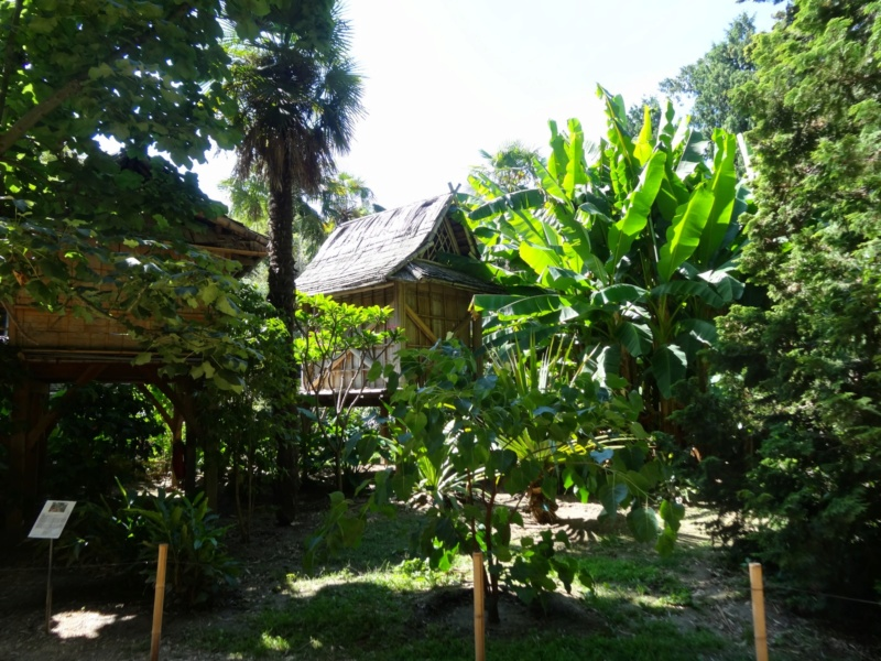 La bambouseraie à Anduze ( GARD) Dsc02044