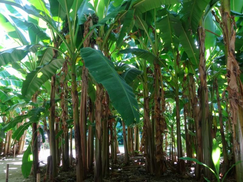 La bambouseraie à Anduze ( GARD) Dsc02046