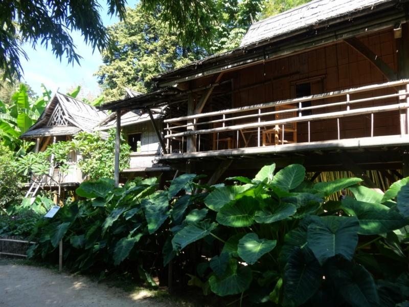 La bambouseraie à Anduze ( GARD) Dsc02048