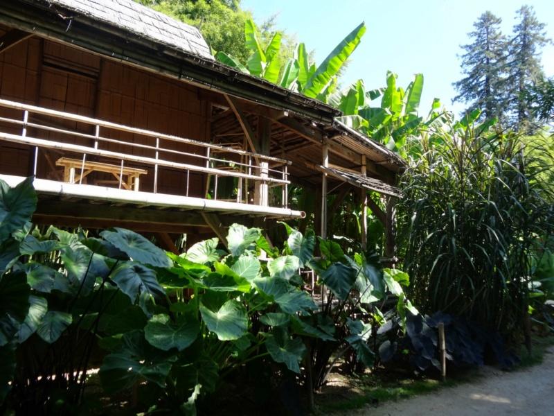 La bambouseraie à Anduze ( GARD) Dsc02049