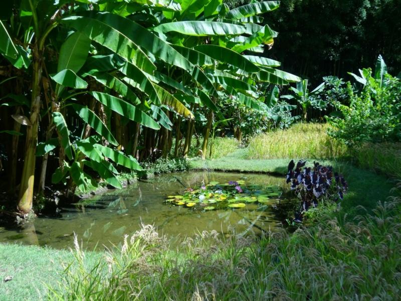 La bambouseraie à Anduze ( GARD) Dsc02050