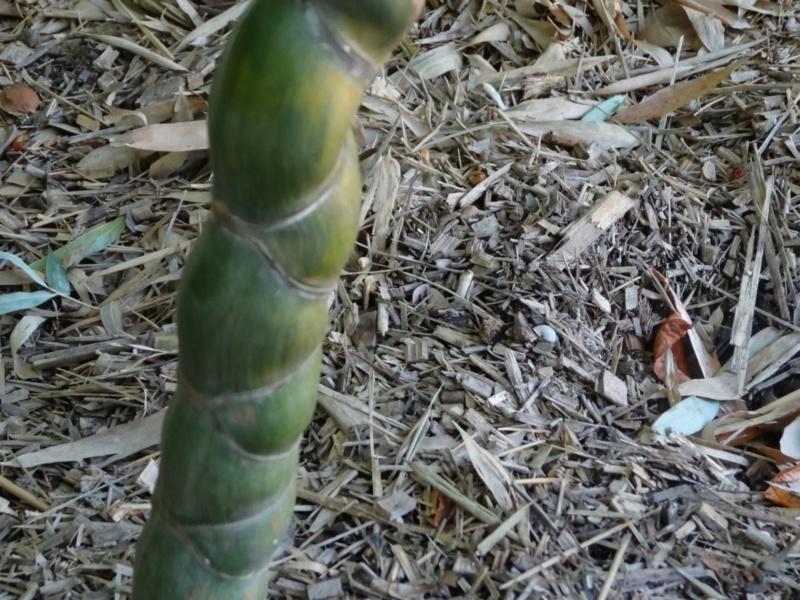 La bambouseraie à Anduze ( GARD) Dsc02110
