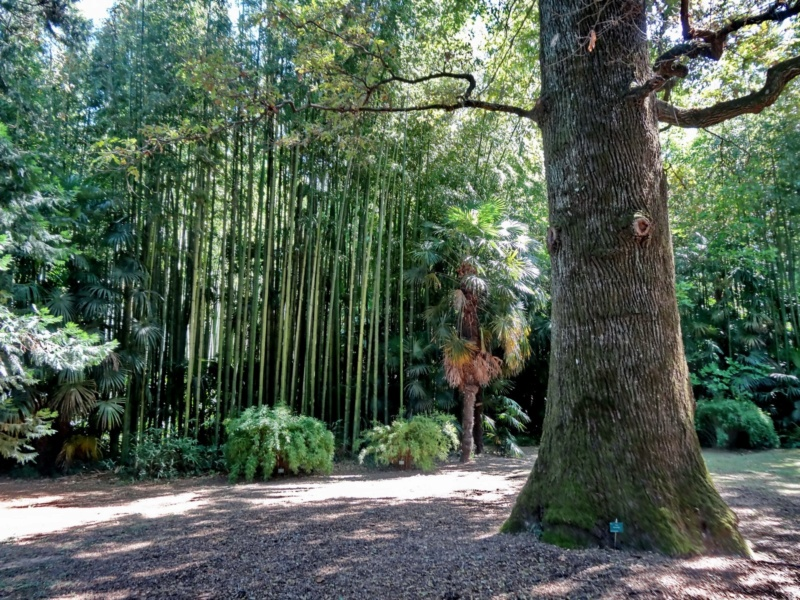La bambouseraie à Anduze ( GARD) Dsc02112