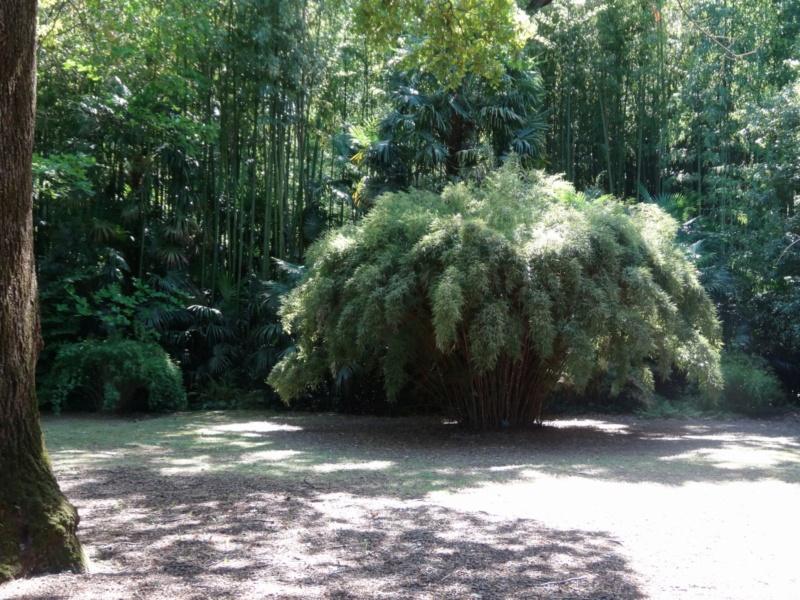 La bambouseraie à Anduze ( GARD) Dsc02113