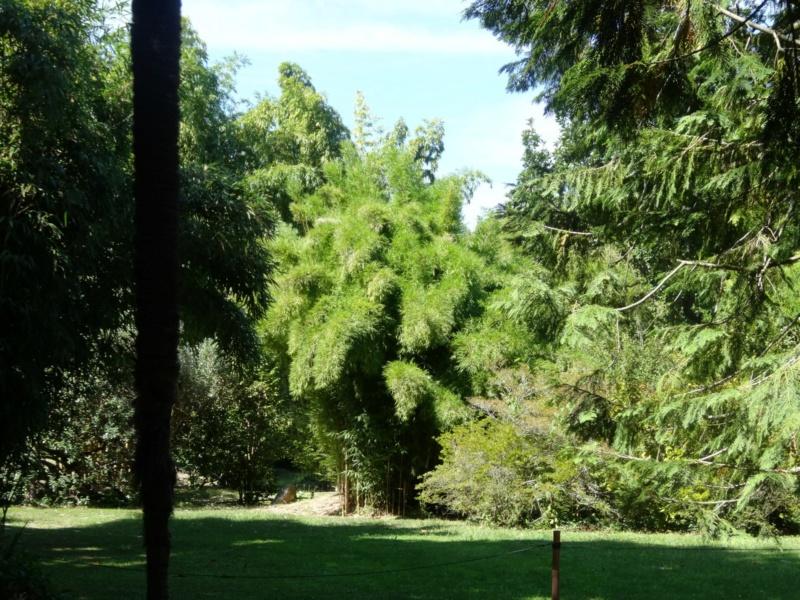 La bambouseraie à Anduze ( GARD) Dsc02114