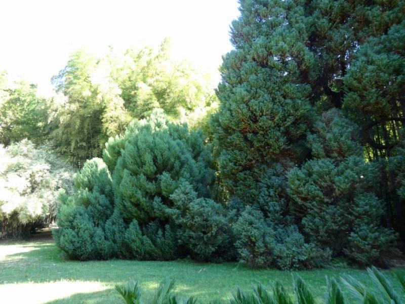 La bambouseraie à Anduze ( GARD) Dsc02116