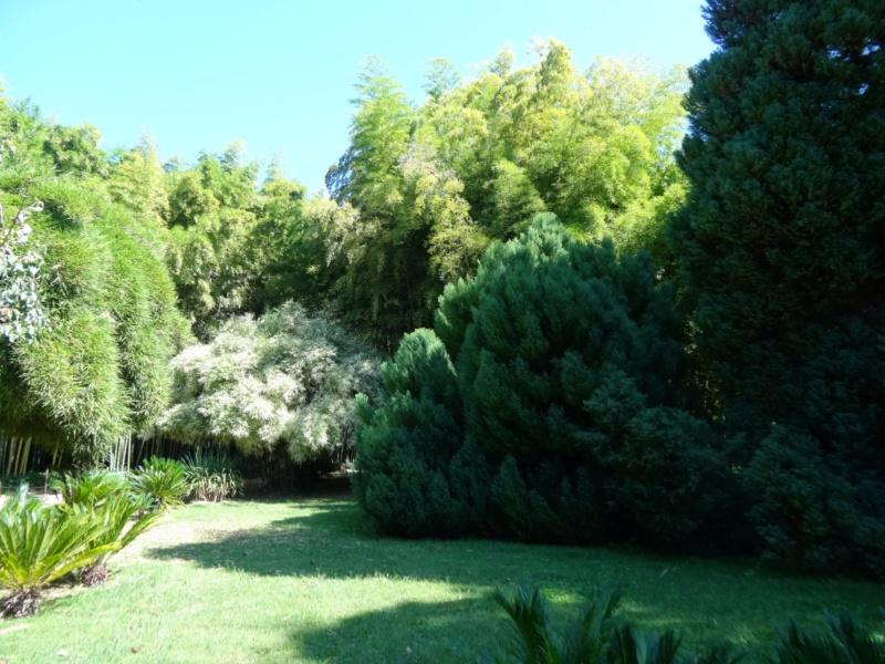 La bambouseraie à Anduze ( GARD) Dsc02118