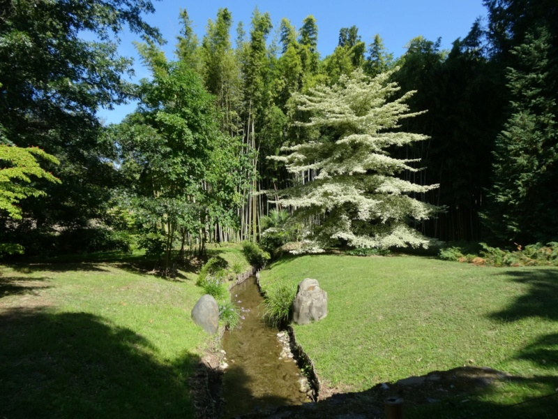 La bambouseraie à Anduze ( GARD) Dsc02119