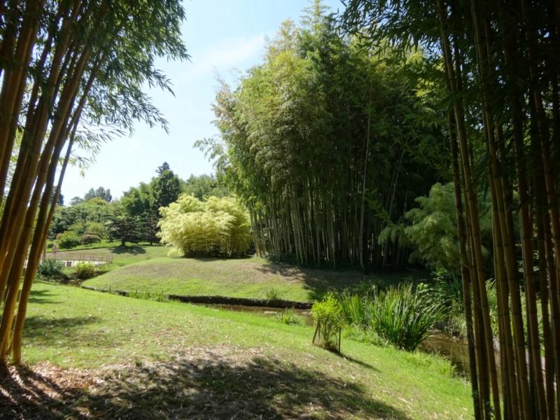 La bambouseraie à Anduze ( GARD) Dsc02121