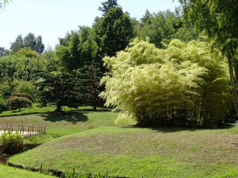 La bambouseraie à Anduze ( GARD) Dsc02122