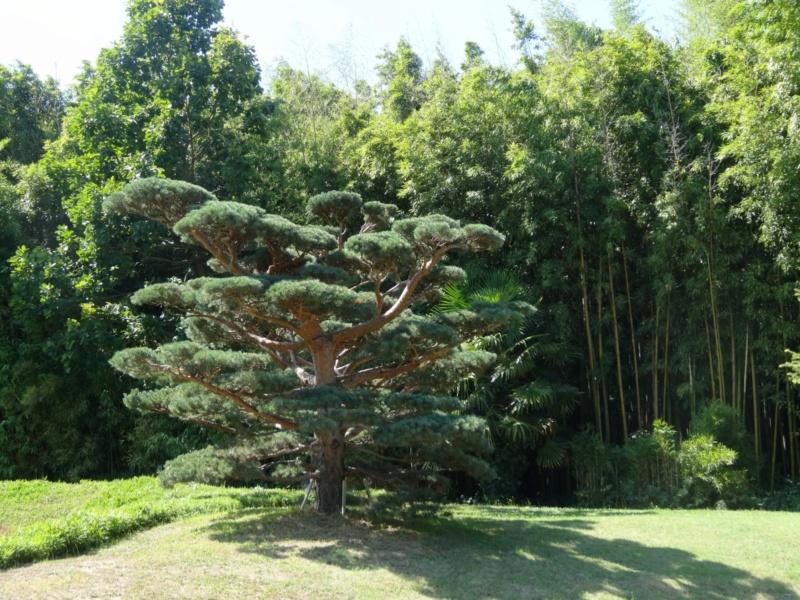 La bambouseraie à Anduze ( GARD) Dsc02123