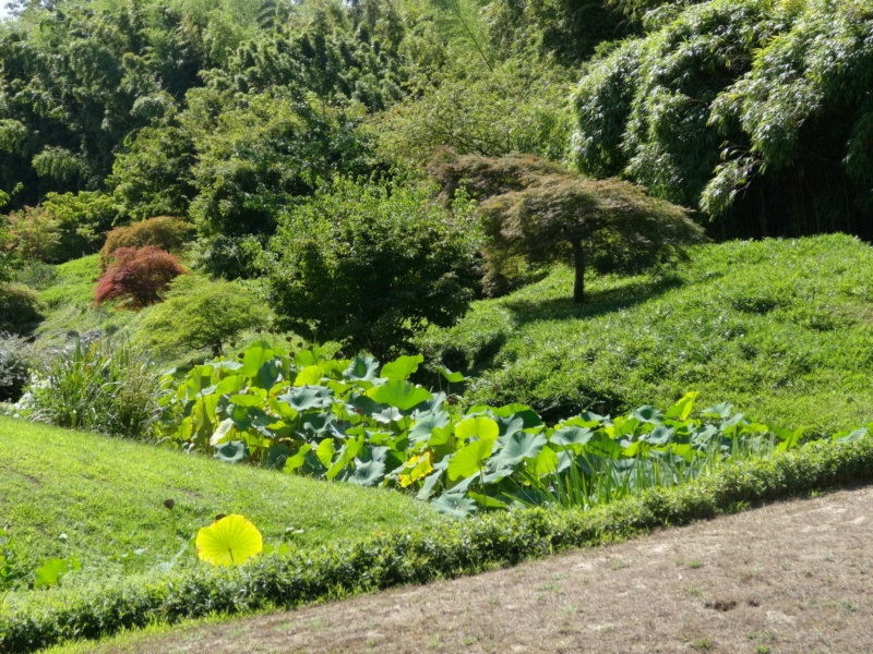 La bambouseraie à Anduze ( GARD) Dsc02124