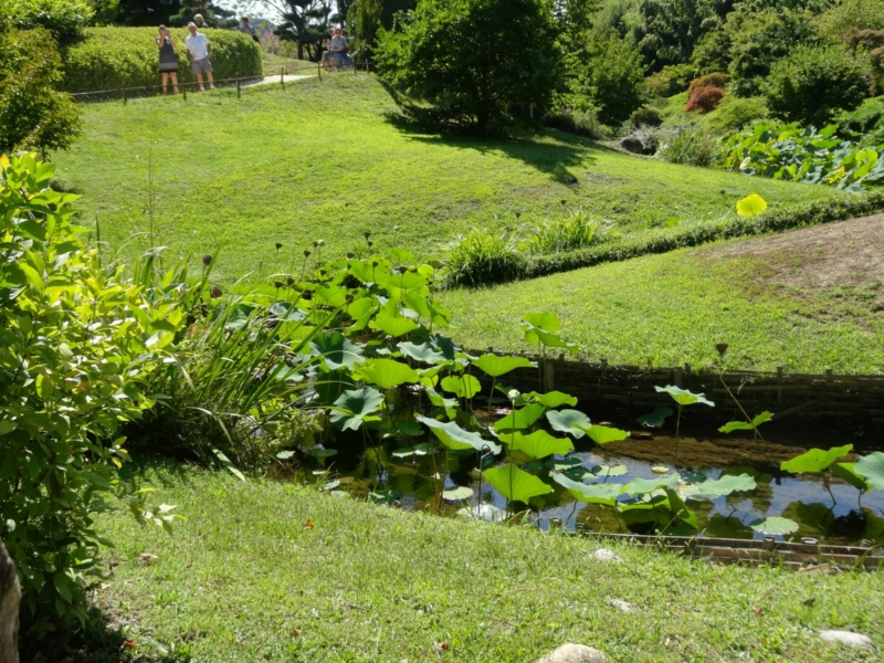 La bambouseraie à Anduze ( GARD) Dsc02125