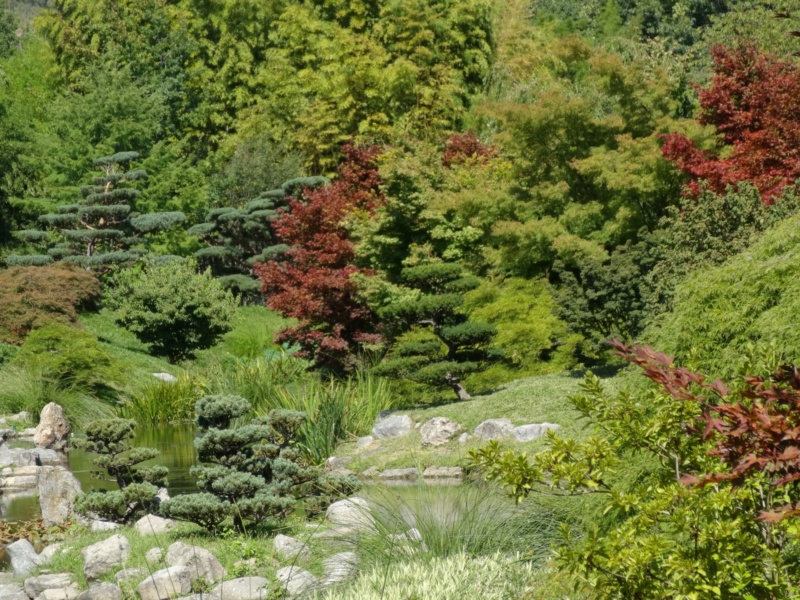 La bambouseraie à Anduze ( GARD) Dsc02127