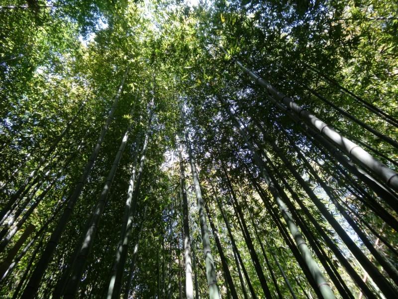 La bambouseraie à Anduze ( GARD) Dsc02130