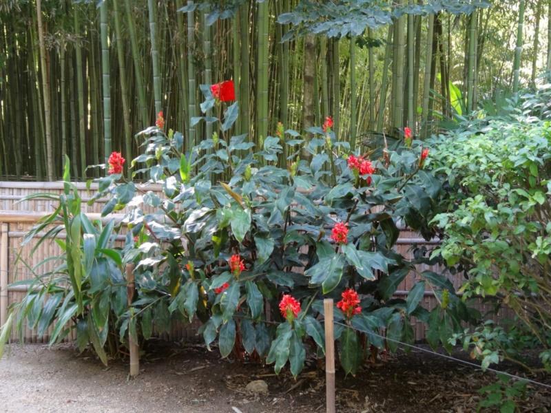 La bambouseraie à Anduze ( GARD) Hedych10