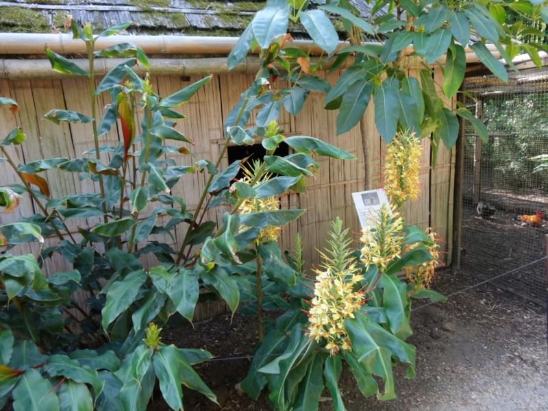 La bambouseraie à Anduze ( GARD) Hedych11