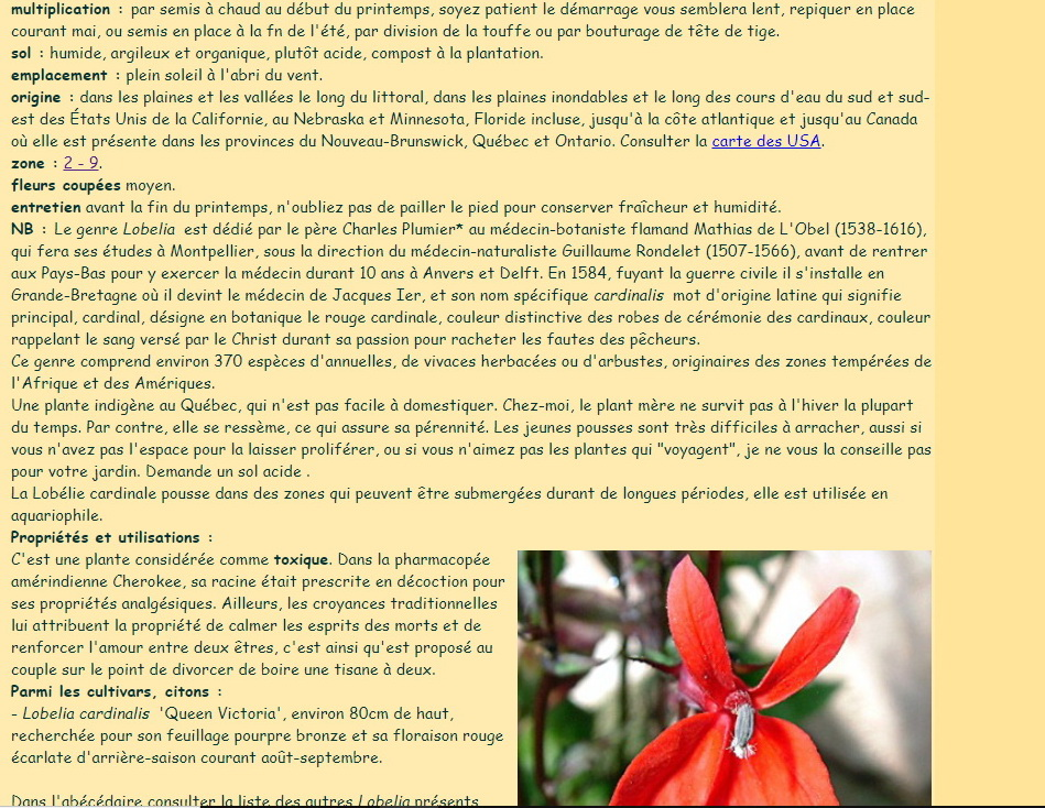 NOTROPIS CHROMOSUS - Page 5 Lobeli11