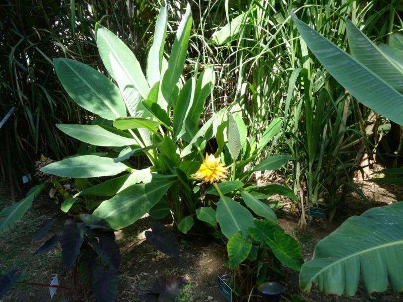 La bambouseraie à Anduze ( GARD) Musell10