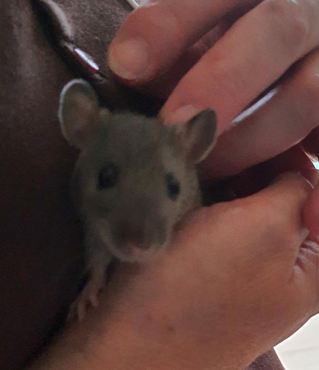 BORDEAUX et environs : Bébés semi sauvages à l'adoption!!! - Page 8 Img-2011