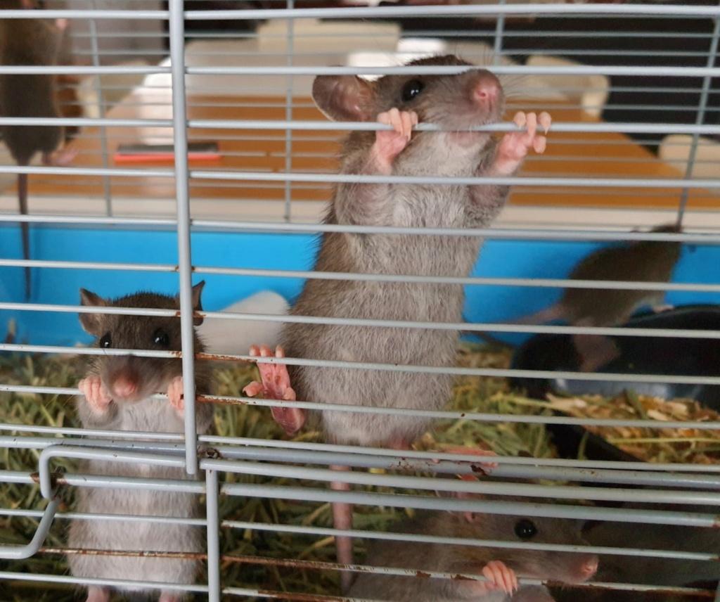 BORDEAUX et environs : Bébés semi sauvages à l'adoption!!! - Page 8 Img-2012