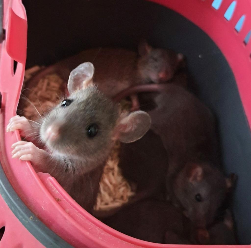 BORDEAUX et environs : Bébés semi sauvages à l'adoption!!! - Page 8 Img-2020