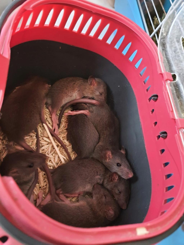 BORDEAUX et environs : Bébés semi sauvages à l'adoption!!! - Page 8 Img-2021