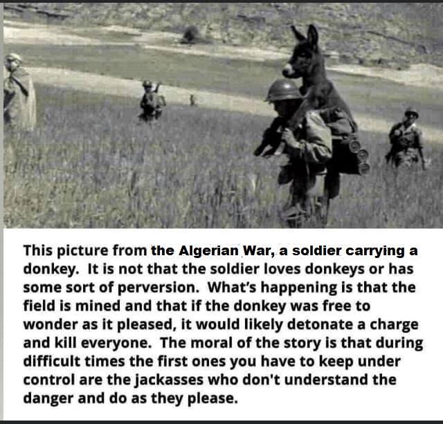 Jackass Donkey10