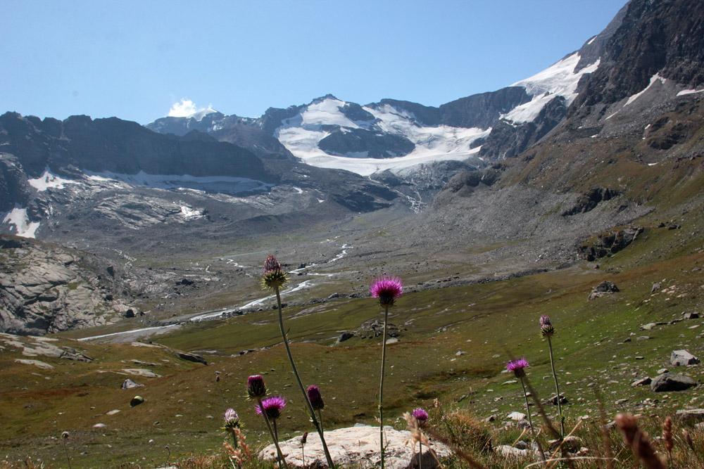 le plein de plantes en Vanoise fin août 11_pay10