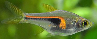 Aquaponie 1266ef11